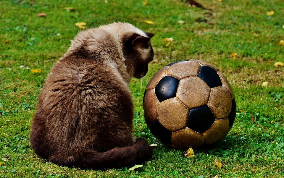 Interview zum Thema Fußballvereine